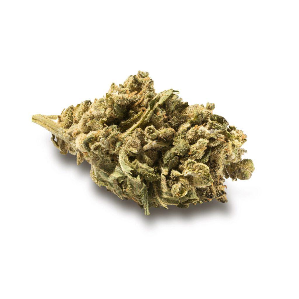 Marihuana w medycynie